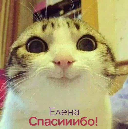 http://www.zverisha.ru/imgbig/1268.jpg