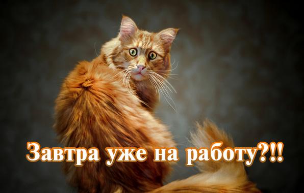 Иван Васильевич меняет профессию Текст