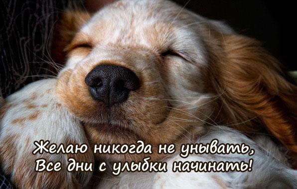 http://zverisha.ru/pics_max/images_329.jpg