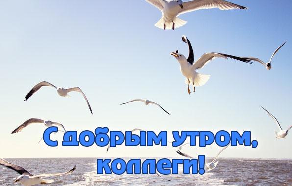 http://www.zverisha.ru/pics_max/images_661.jpg