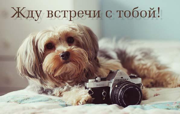 жду встречи с тобой картинка