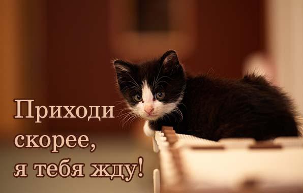 http://www.zverisha.ru/pics_max/images_773.jpg