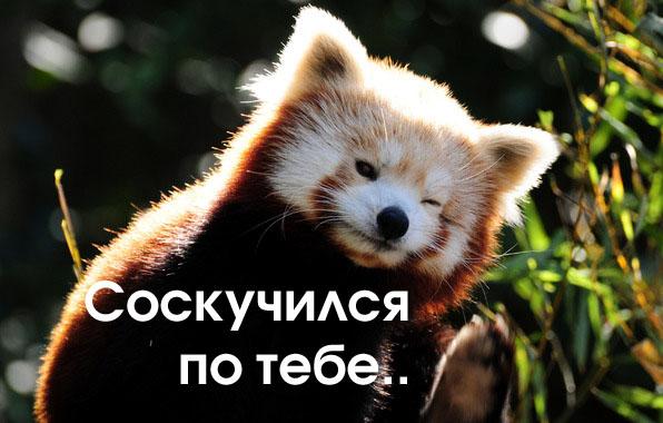 я панда прикол
