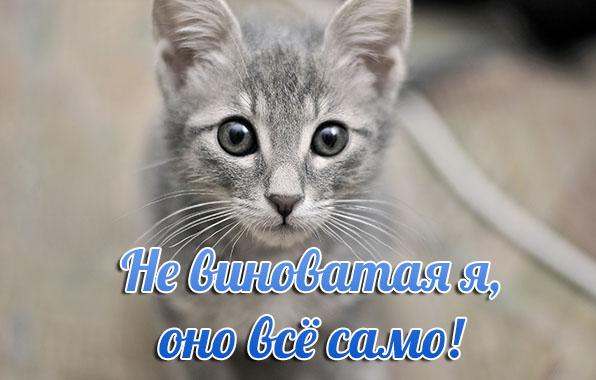 http://www.zverisha.ru/pics_max/images_887.jpg
